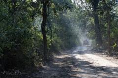 DSC_0319_Forest